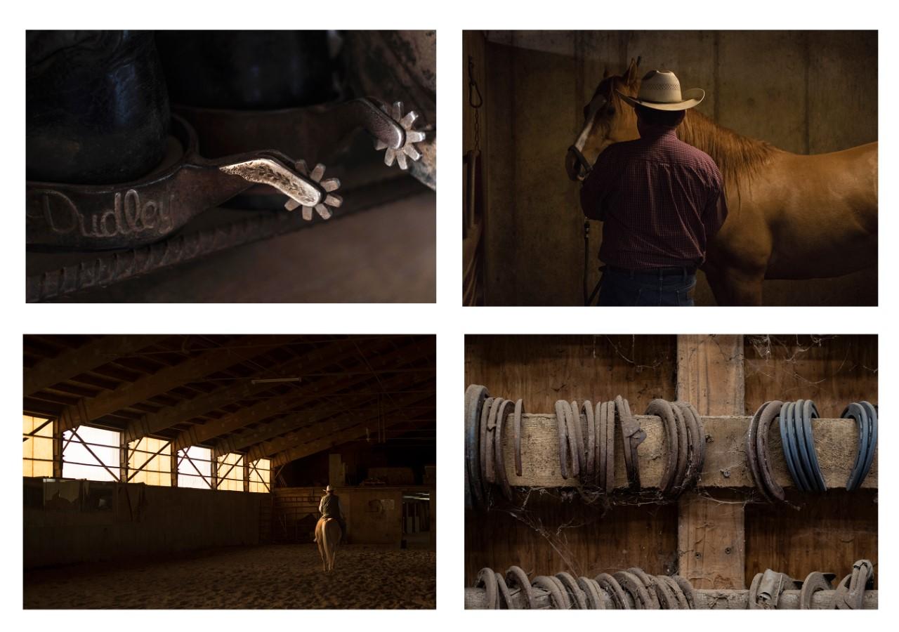 Photographs of horse breeding and horse training